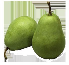 Beurre Alexander Lucassen Pears